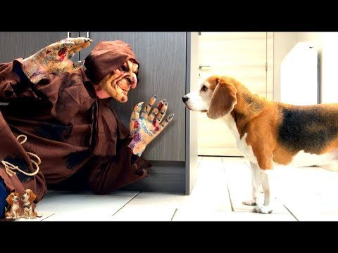 Dogs vs Farting Troll : Funny Dogs Louie & Marie