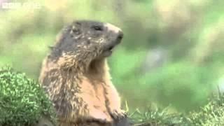Best of BBC Talking Animals