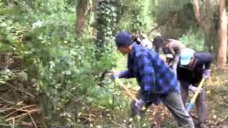 Sutro Stewards, REI and Bay Area Ridge Trail Volunteer Work Day