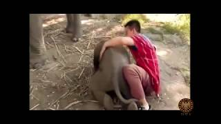 Unbelievable Friendship! wild animals showing love to humans 2017 P2