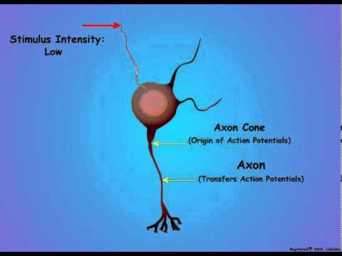 2. Neuron Coding