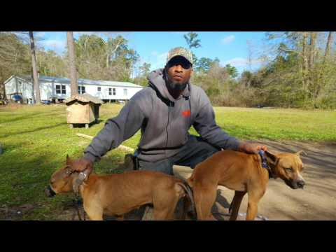 THOMPSON'S KENNEL'S HE CAME WITH BACK UP