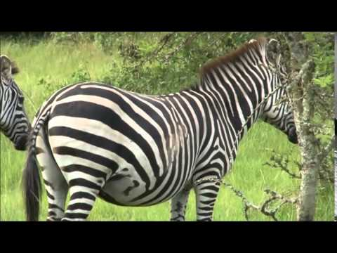 Lake Mburo National Park Experience By Africa Wild Explorations