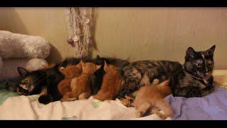 рыжие котята подросли :) 5 рыжих котят!  как их отличить? :))