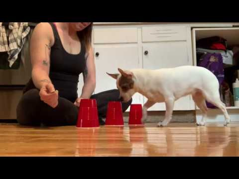 Sooky Expert Trick Dog - DMWYD