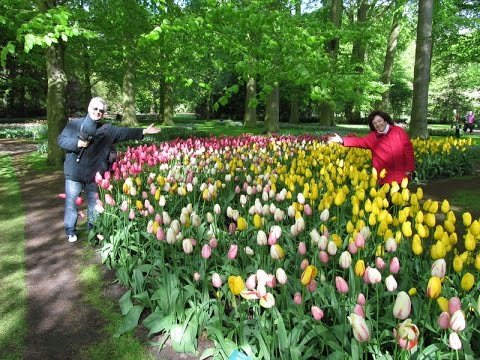Keukenhof parque de tulipanes holanda 2012 youtube - Jardines de tulipanes en holanda ...