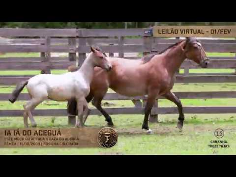 Lote 45 - Ia Ia do Aceguá