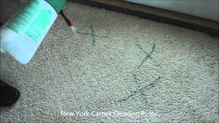 Pet Stain & Pet Odor Removal |  Professionally Removed By Carpet Cleaners