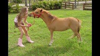Американские миниатюрные лошади и пони - чудо-малыши! Ферма по разведению Мини Лошадей