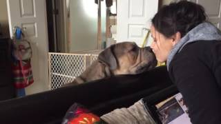 Crazy Lady Makes Out With Her Two Dogs! Watch With Caution!