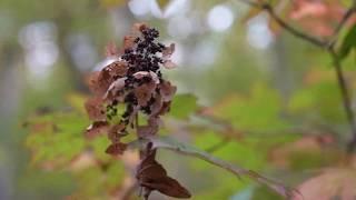 Fall in Appalachia - Sony a7riv