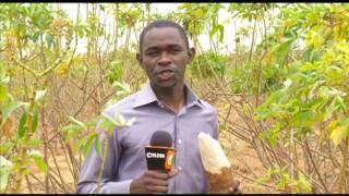 Smart Farm: Cassava Farming