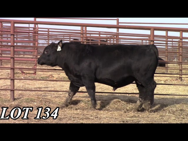 Mead Angus Farms Lot 134