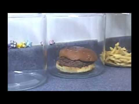 The Shocking Truth About McDonalds Burgers And Fries YouTube - Fast food ads vs reality the truth unveiled by these photos