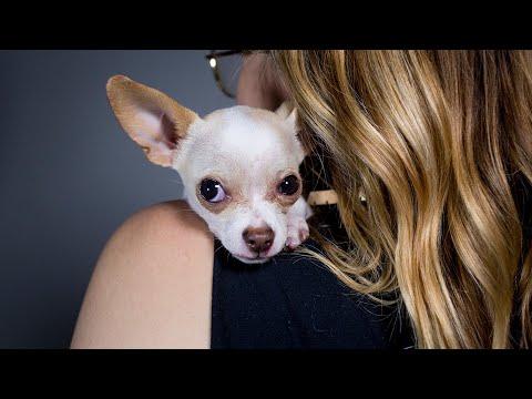 """Meet Tony Hawk the """"Miracle Puppy"""""""