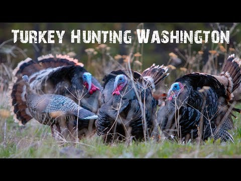 Turkey Hunting 2018 Eastern Washington