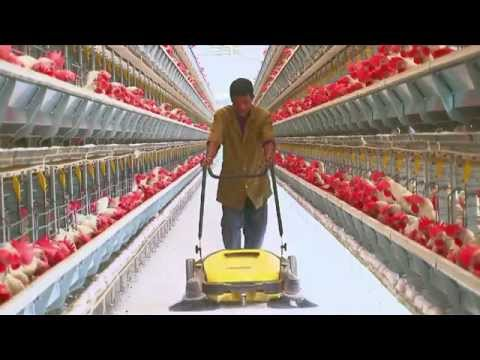 Poultry Farming | Open House Battery Cage System