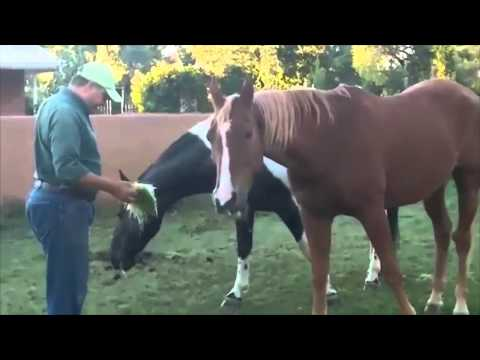 Heavenly Fodder: Health For Your Horses