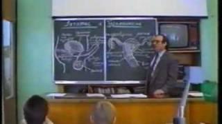 Урок 3 Часть 1 Зачатие и беременность