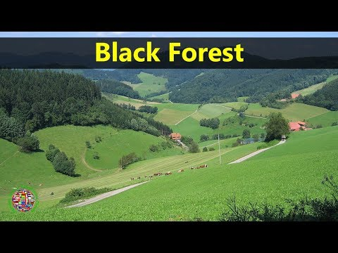 Best Tourist Attractions Places To Travel In Germany   Black Forest Destination Spot