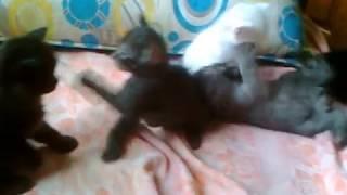 Котята разных цветов резвятся на кровати