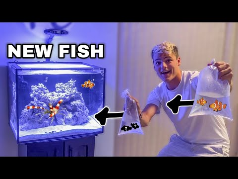 BUYING NEW SALTWATER FISH For AQUARIUM!?!