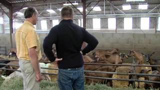 Le lait de chèvre, une vidéo Soignon