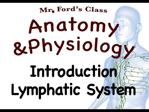 Lymphatic System : Introduction To The Lymphatic System (15:01 ...