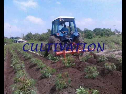 CASSAVA PRODUCTION.wmv