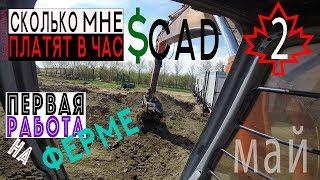 Сколько платят на ферме в канаде. Первая работа на ферме
