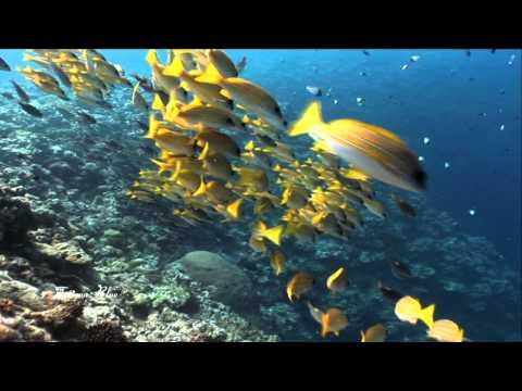 Valdi Sabev - Blue Ocean