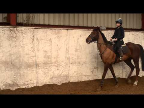GCSE Horse Riding Video - Level 10 (A*)