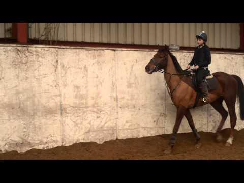 GCSE Horse Riding Video - Level 10 (A*)