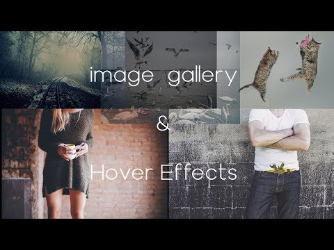 İmage Gallery With Amazing Hover Effects Using Only HTML & CSS