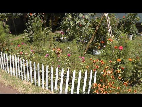 Cottage Living: Garden Vlog, Tropical Storm