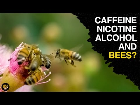 are-bees-the-addicts-of-the-animal-kingdom?
