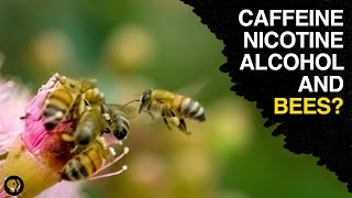 Are Bees the Addicts of the Animal Kingdom?