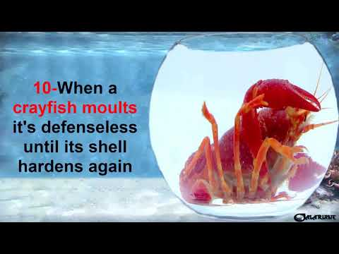 TIPS AND FACTS ABOUT CRAYFISH