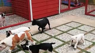 Modern köpek çiftliği böyle yapılır