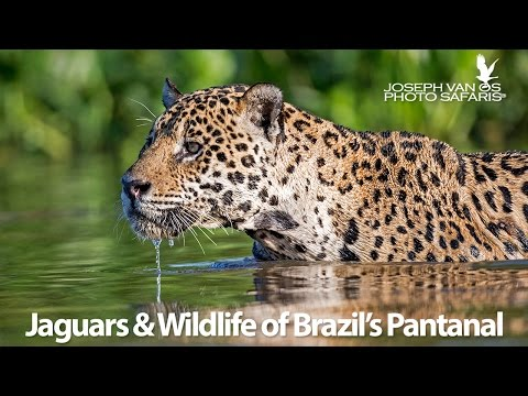Jaguars & Wildlife of Brazil's Pantanal - Photo Tour