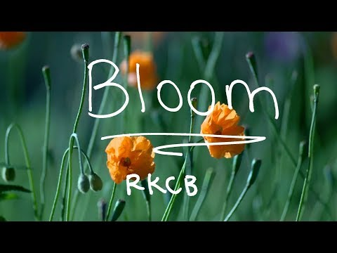 RKCB - Bloom (Music Video & Lyric Video)