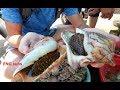 Странная ракушка Мело! Моллюски по местному Вьетнамскому рецепту!