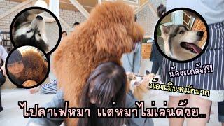 Grace zy || vlog ep. 30 ไปคาเฟ่หมา โดนหมาทำร้าย???.. น้องเมินหนักมาก😢