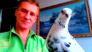 Голубь голубе.Это мой мир.голуби.Голубей смотреть. Птицы.  голубятня.