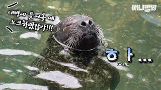 딸-너-어릴때는-아빠-힘내라며-우리가-있다며-ㅣ-daddy-seal-struggles-to-deal-with-his-adolescent-daughter