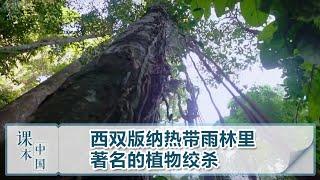 [跟着书本去旅行]西双版纳热带雨林里著名的植物绞杀| 课本中国