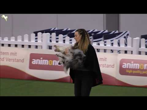 FCI Dog Dancing World Championship 2017 - Aurélie Devulder and Cheyenne
