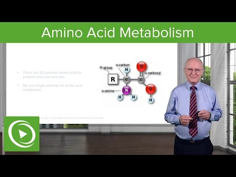 Amino Acid Metabolism: Introduction – Biochemistry | Lecturio