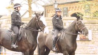 The Thames Valley Police - Mounted Section