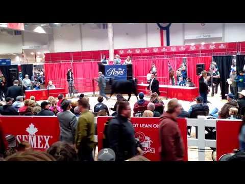 2017 Royal Winter Fair cattle auction 1